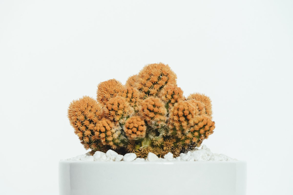 Cacti in front of the white wall