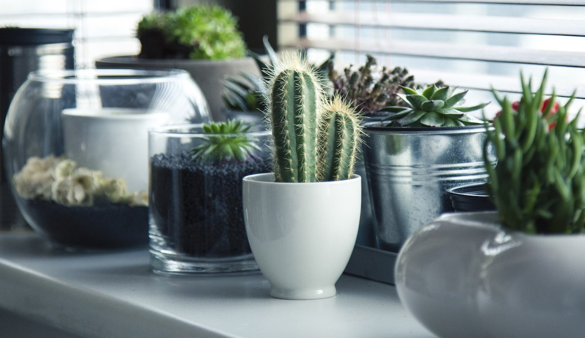 Variety of cactus in a single design.