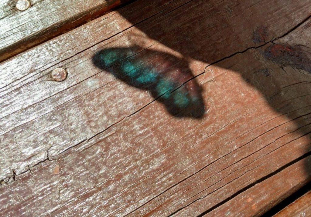 brown-wooden-floor-with-shadow-featured-image
